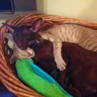 Drummoyne, Sydney Cat-sit the Love Cats