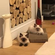Holiday sit with two kittens (now cats!)