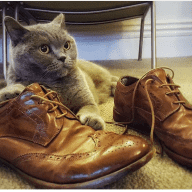 Cat lovers for central London cat sitting