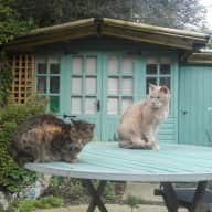 Loving care for two cats, one who needs daily medication