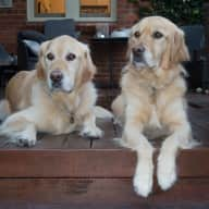Bayside Golden Retrievers by the Sea for the Month of March 2018?