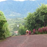 House and dog sitter needed for our home in Ojochal, Costa Rica November 5,2015 - December 2, 2015. Possible extended dates 10/8 - 10/29 for neighbor.