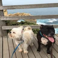Pet sitter needed approx 1 week for 2 very spoilt dogs and one cat