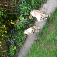 Two friendly Lhasas and three cats need loving sitters from 21 May to 4 June in Frome, Somerset. Come a few days earlier to settle in.
