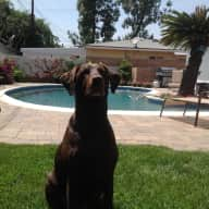 Dog loving, responsible sitter required in Southern California