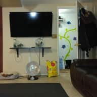 Single House/Pet sitter for king charles, chihuahua, and 2 tabby cats