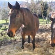 Animal lover(s) wanted in Tuscany!