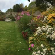 sitter required for house and 2 friendly dogs in rural location near Banbury
