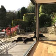 2 lovely flatcoats, beautiful large Yorkshire home, great country location