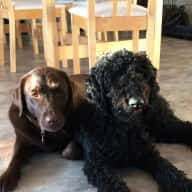 House sitter required for 2 dogs over the Christmas 2018, New Year 2019 period.