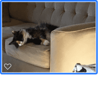 Compassionate vegan-friendly house sitter who loves shy cats