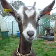 Pet and home sitter needed for 6 acre smallholding in UK for one week in August.