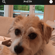 Caring and walking my 5year old jack Russell/bichon cross dog