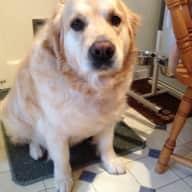 House/Pet sitter needed in Leavenheath, Suffolk for 2 weeks in July