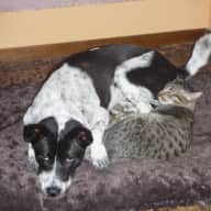 Pet sitter needed for 2 dogs and 2 cats in beautiful villa 10 minutes north of main street in Ubud