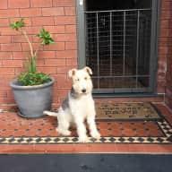 Eastern Sydney House with Dog