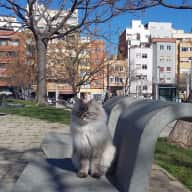 Apartment with terrace (and low-allergen cat!) in Barcelona