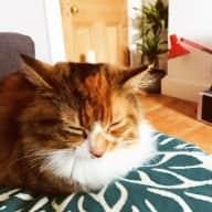 Fluffy Cat & Edinburgh Christmas