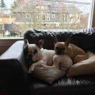 3 bed, 1.75 bath, 2,200 sq ft, 2 French Bulldogs