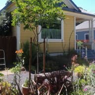 Wine country house sit, small house in Santa Rosa, Northern California,  with lovable dog