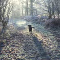 Lovely country home, with direct access to ancient forest in Hampshire. 1 fab 2 year old Labrador.