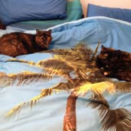 Single or couple to give two independant cats love and attention