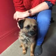 Pet sitter needed for friendly border terrier and tame bird