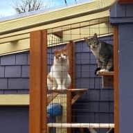 Enjoy Portland with two friendly kitties