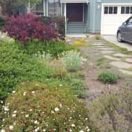 Looking for a dog, chicken and house sitter in a beautiful coastal California Village