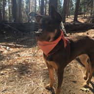 Stay with a sweet pup in a cozy home in quaint North Portland!