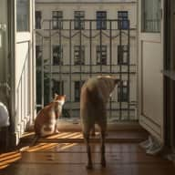 Pet sitting Stevie the Dog and Louis the Cat in Prenzlauer Berg, Berlin