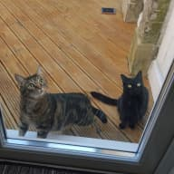 2 Cat Home in Walthamstow