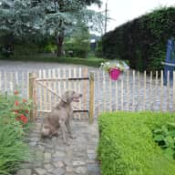 last minute search for house/dog sitter Belgium