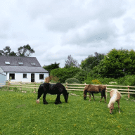 House sitter required for dogs, cats and ponies in beautiful Pembrokeshire