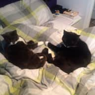 Cat sitter for 2 nights over Christmas in Clapham, SW London
