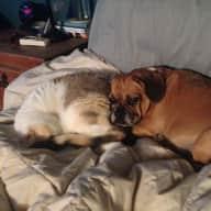 Pet/House Sitter Needed-Newport Beach, CA