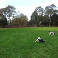 pet sitter wanted for my 2 dogs for 3 weeks in Nunawading VIC