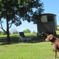 Bouncing brown labradoodle needs active sitter/s to stay in his home amongst the vineyards