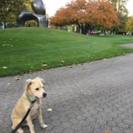 Dog sitter - Zurich (Seefeld)