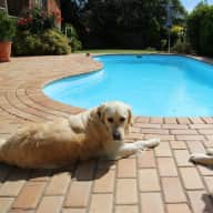 Retired couple with two Golden Retrievers, who love travelling and enjoy the peace of mind of having a house / pet sitter while we are away.
