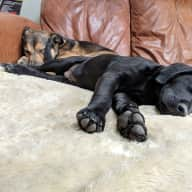 Indy and Loki looking for 3 weeks of help!