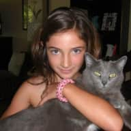 Russian Blue cat and comfortable 3 bedroom in Golden, CO