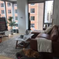 Seeking Cat/Housesitter in NYC Union Square Area