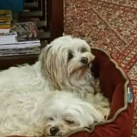 Pet / house sitter wanted