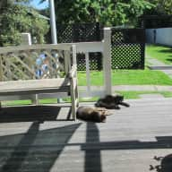House/petsitter for a month in Christchurch
