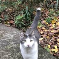 Sonoma Garden Bungalow w 3 Vibrant Cats