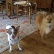 Looking for House sitter for 1 cat Tommy & 2 dogs Alvin & Pepe
