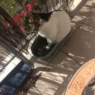 Affectionate little cat needs a new friend