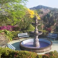 Couple needed to sit 4 dogs and beautiful finca with pool in Panama.