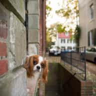 Looking for Holiday Sitter for 2 Fur-Kids Near Quaint Old Town, Alexandria - Just Outside of Washington, DC